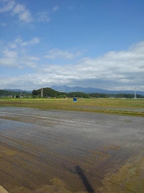 水田と山(5月11日)