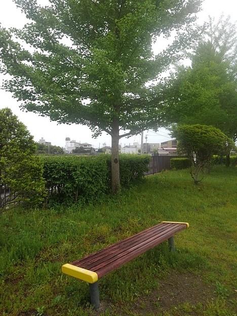 公園のベンチとイチョウの木(5月5日)