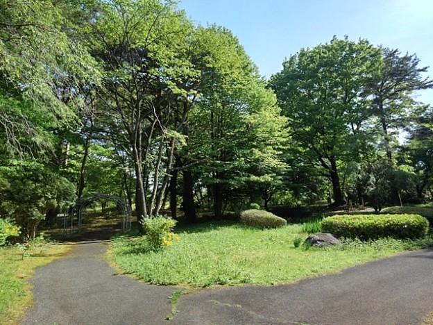 那須野が原公園の森の道(5月6日)