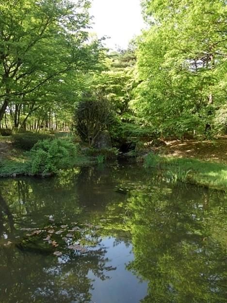 那須野が原公園の森の池(5月6日)