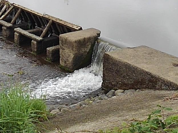 川の堰(5月19日)