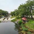 Photos: 橋の上から見えた川(5月14日)