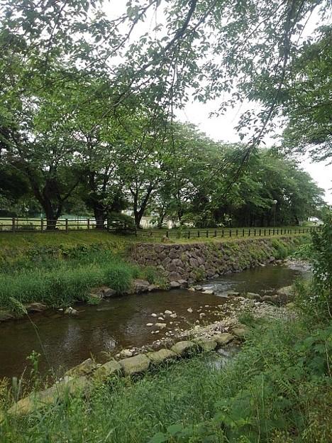 石垣の土手もある川(5月24日)
