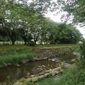 Photos: 石垣の土手もある川(5月24日)