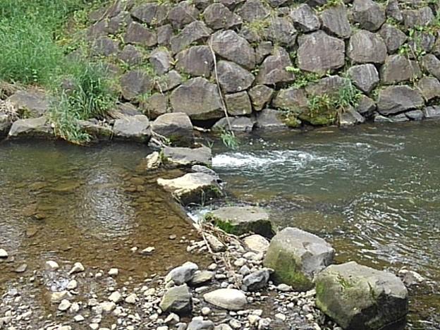 石垣の土手あたりの川の景色(5月24日)