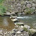 Photos: 石垣の土手あたりの川の景色(5月24日)