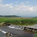 Photos: 川の堰(5月29日)