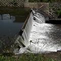 水流の凄い堰(5月26日)