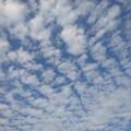 綺麗な鱗雲(6月6日)
