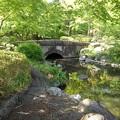 那須野が原公園の池の橋(5月6日)