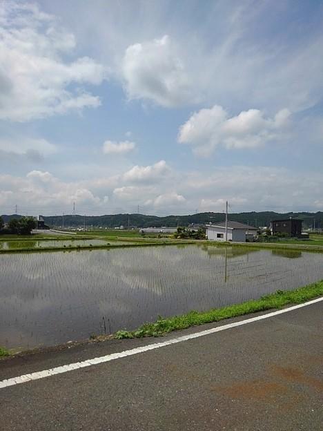 水田の映り込み(6月3日)