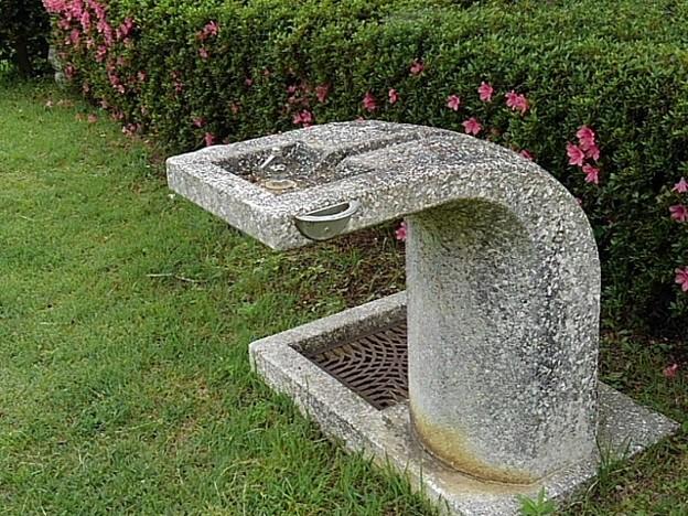 ツツジと水飲み場(6月2日)