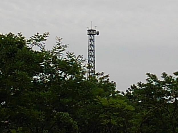 木の奥に見えた鉄塔(6月8日)
