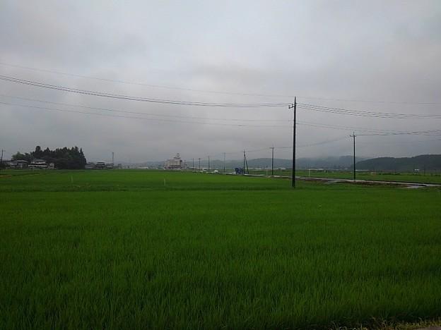 小雨の水田(7月5日)