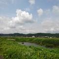 Photos: のどかな川(6月22日)