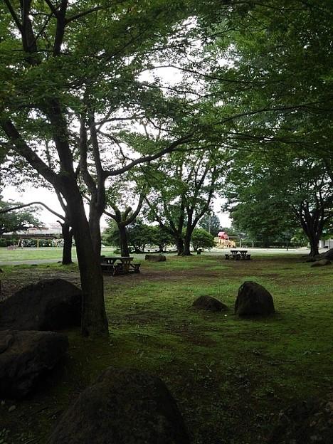 長峰公園の爽やかな緑の広場(7月10日)