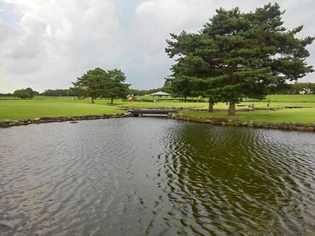 ゆうゆうパークの波打つ池と木(7月24日)