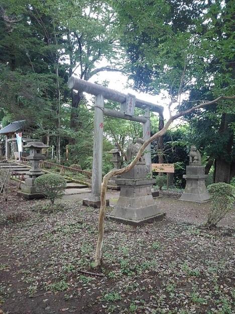 烏ヶ森公園の丘の鳥居(8月12日)