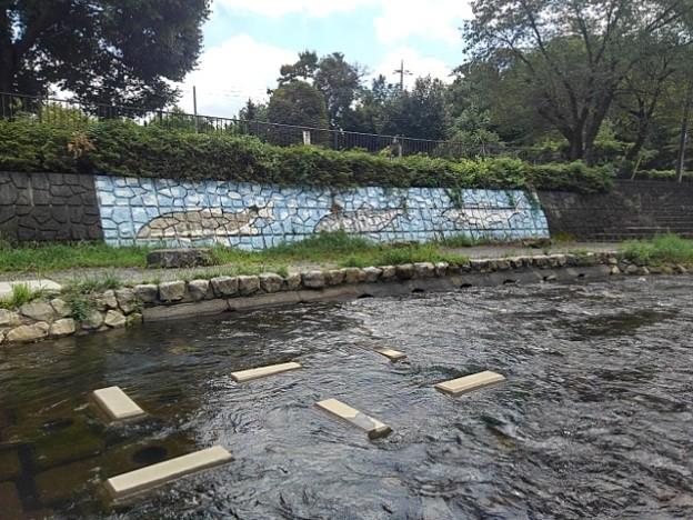 魚の絵と川(8月3日)