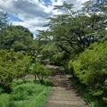 Photos: 長峰公園の丘の下り階段(8月10日)