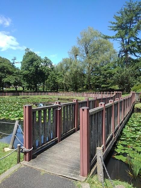 長峰公園の池の橋(8月10日)