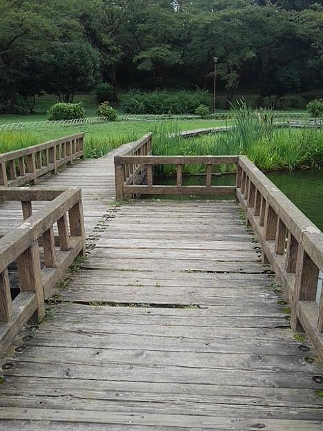烏ヶ森公園の池の橋(8月12日)
