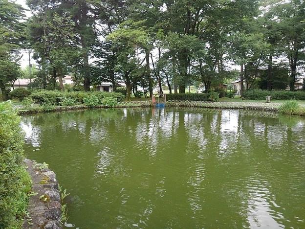 烏ヶ森公園の奥に水門が見える池(8月12日)