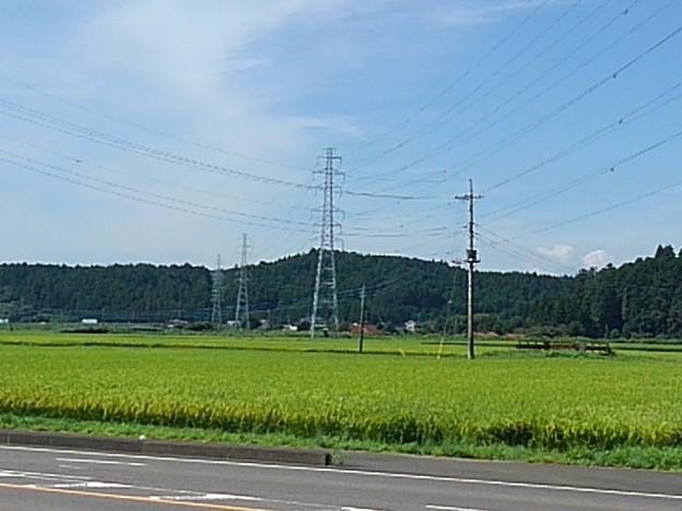 田園と鉄塔(8月26日)