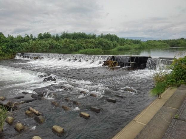 川の堰(8月24日)
