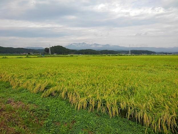 水田地帯(8月31日)