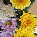 Photos: 花瓶の花(8月29日)