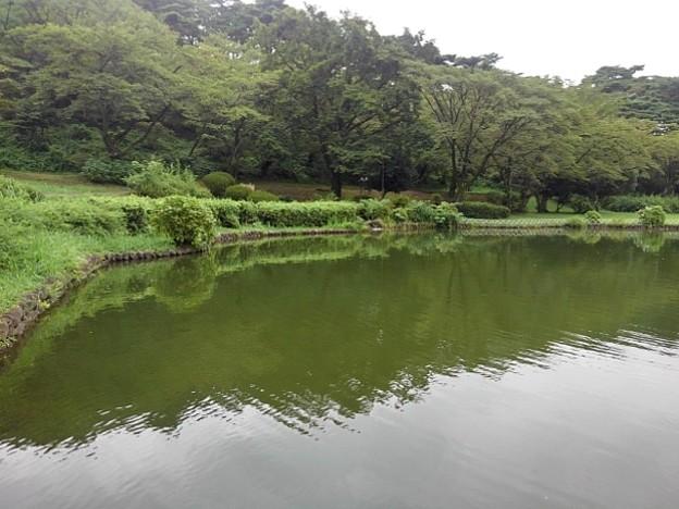 緑色が多めの烏ヶ森公園の池の道から見えた景色(8月12日)