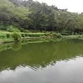 Photos: 緑色が多めの烏ヶ森公園の池の道から見えた景色(8月12日)