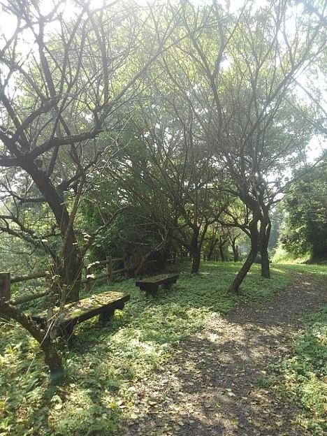 川崎城跡公園の丘の道(8月28日)