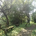 Photos: 川崎城跡公園の丘の道(8月28日)