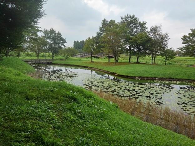 川崎城跡公園の池のある眺め(8月28日)