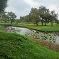 Photos: 川崎城跡公園の池のある眺め(8月28日)