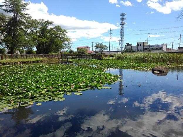 長峰公園の池の水面の映り込み(8月10日)