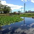 Photos: 長峰公園の池の水面の映り込み(8月10日)