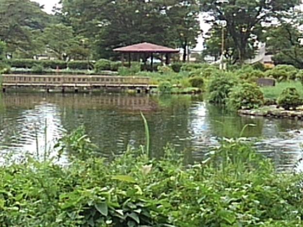 美しい烏ヶ森公園の池の景色(8月12日)
