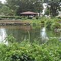 Photos: 美しい烏ヶ森公園の池の景色(8月12日)