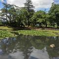 Photos: 長峰公園の池に映り込んだ雲(8月10日)