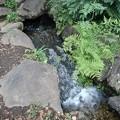 Photos: 烏ヶ森公園の池の人工の滝(8月12日)