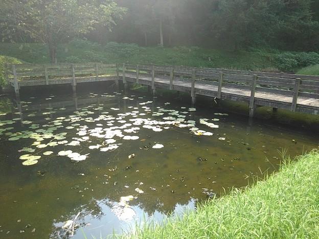 川崎城跡公園の池(8月28日)