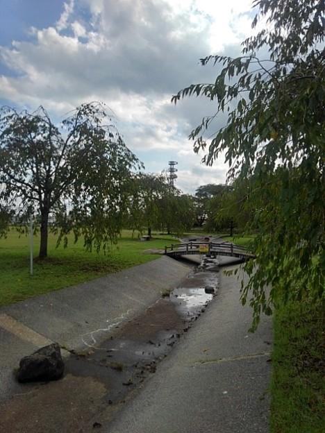 長峰公園の人工の小川(9月10日)