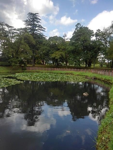 長峰公園の池の水面の映り込み(9月10日)