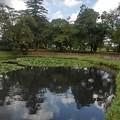 Photos: 長峰公園の池の水面の映り込み(9月10日)