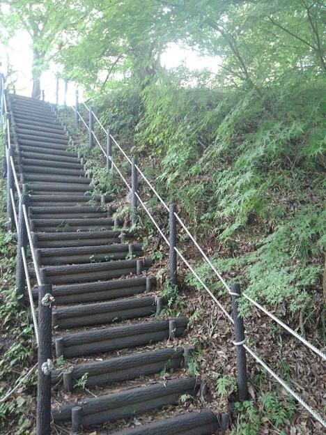 川崎城跡公園の丘のモミジのある階段(8月28日)