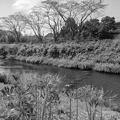 川とヒガンバナ・モノクロ(9月15日)