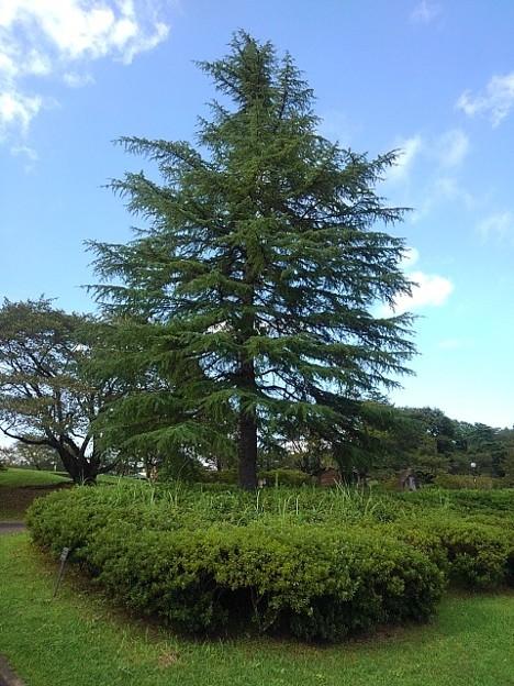 長峰公園の大きな木(9月10日)